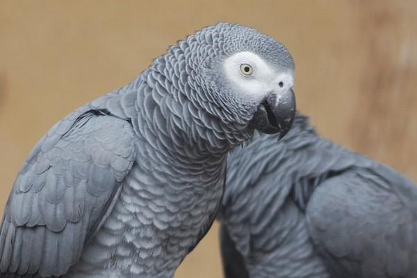 assurance santé pour perroquet