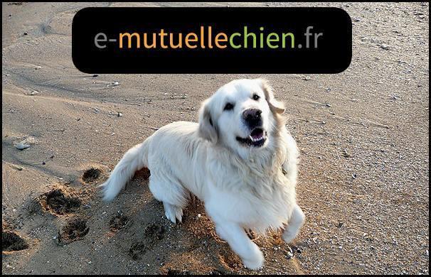 mutuelle chien sur internet